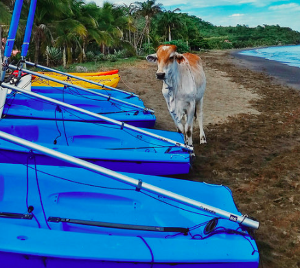 Sailboats in Costa Rica